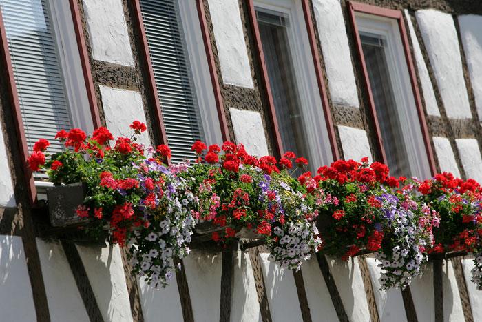 Fensterblumen am Fachwerkhaus